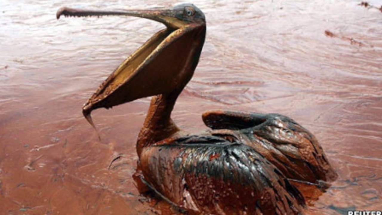 effects of oil spills As catastrophic as the gulf oil spill has been for the environment and residents'  livelihoods, experts say its impact on human health and.