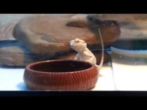 Freddy Eats Phoenix Worms
