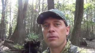 10/13/2012 Hog Hunt with William Malone in the Horn Swamp of AL