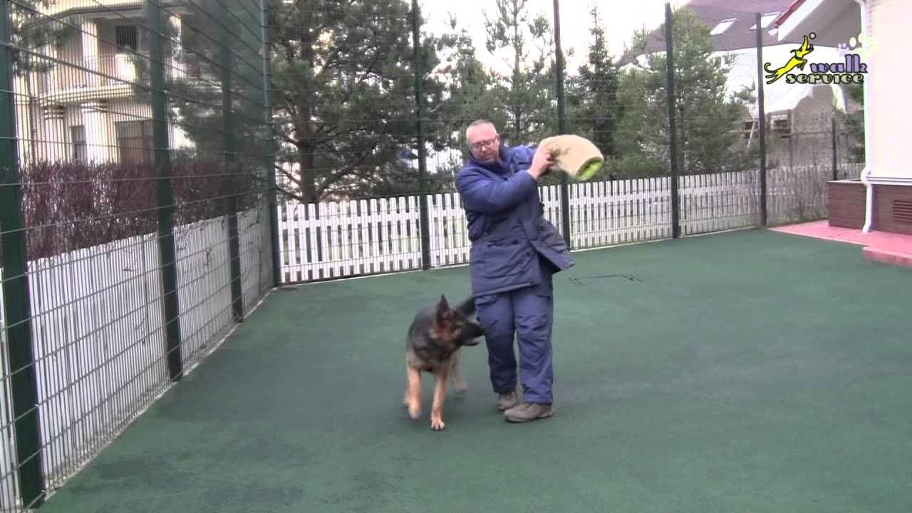 How to play and train a German Shepherd puppy using a sleeve