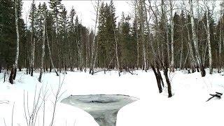 КЛЁВ ТАЕЖНЫХ КРОКОДИЛОВ!!! День 2ой. Идеальная рыбалка на щуку на омуте сибирской микроречки Tomsk