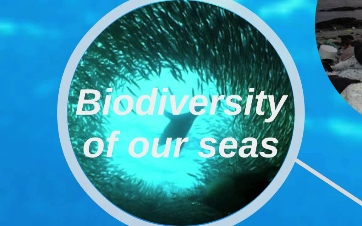 a research of a leading marine The palau international coral reef center is palau's leading research and aquarium institution with a mission to guide efforts supporting coral reef stewardship through research and its applications for the people of palau, micronesia, and the world.