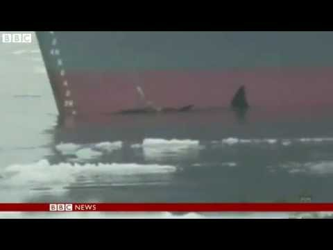 BBC News   Japan 'scientific' whaling contested by Australia
