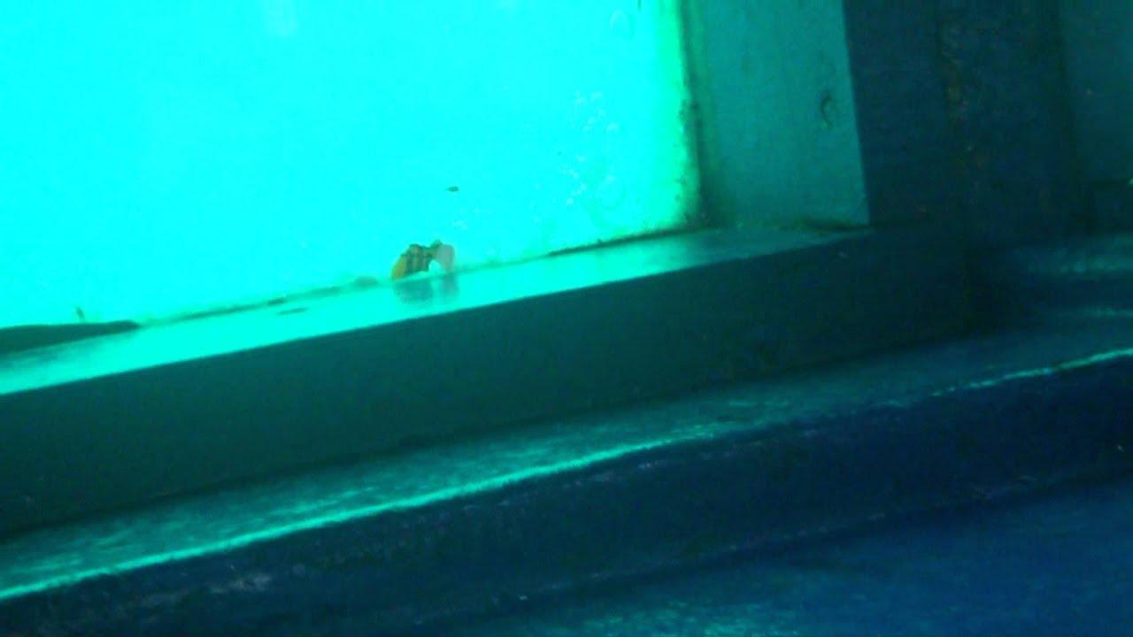 La virgen que esta debajo del agua acapulco dom 24jul for El hotel que esta debajo del agua