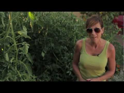 how-to-get-huge-tomato-plants---easy,-cheap-tomato-fertilizing-tips