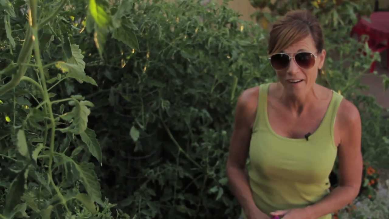 How to get Huge Tomato Plants - Easy, Cheap Tomato Fertilizing Tips - YouTube