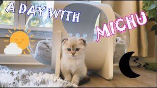 A Day with MICHU   New Scottish Fold kitten [4K]