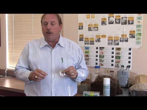 Flea Control : Using Borax to Kill Fleas