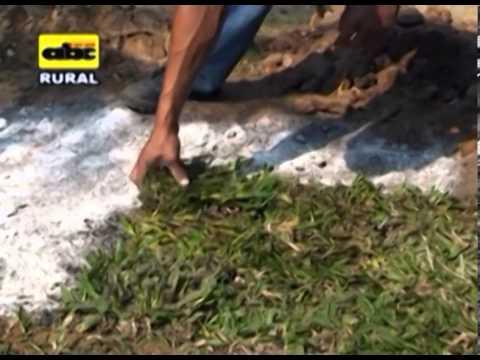 C mo plantar pasto en el jard n youtube - Como plantar cesped en el jardin ...
