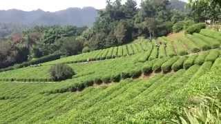Yearning Tea Plantation Tourist Attraction (雁南飞茶田度假村) - China