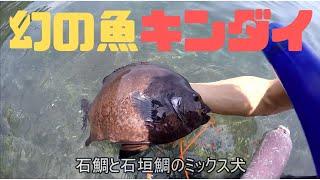 ブログも見てね!この日の 関西お魚突き https://ameblo.jp/osaka-osaka...