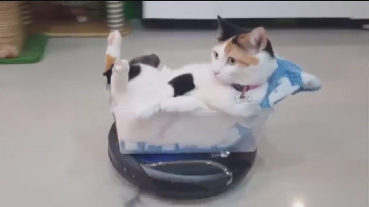 Cat Roomba Video Youtube
