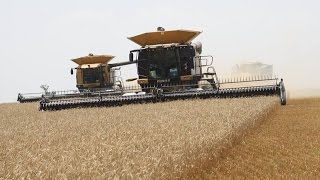 Two Claas Lexion Combines Harvest 80ft Wheat