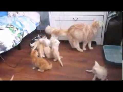 Mamma gatta fa PATAPUNFETE e i gattini spariscono