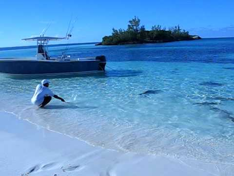 Shark feeding frenzy in shallow water..... !!!!