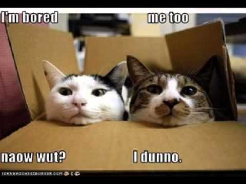 Funny animal pictures with sayings