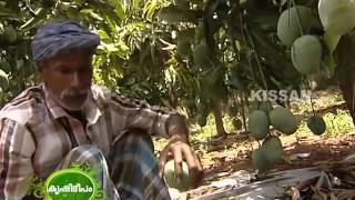 Sandesh One High Density Mango Plantation