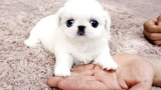Best Of Cute Baby Animal Videos Compilation 2016 thumbnail