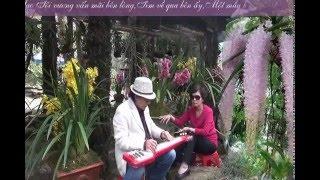 NHỚ MÙA HOA TÍM Mạnh Phát Guitar Hawaii CAODZAN 01DVD64