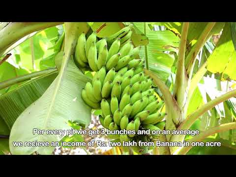 1 Mysore Organic farming