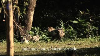 Entre Lenguas 'Mazateco'