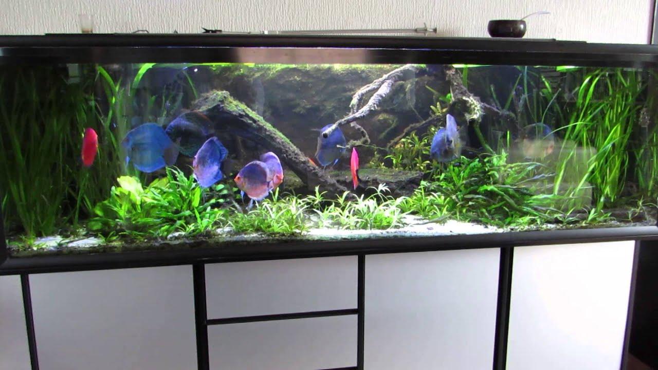 720 liters discus akvarium og lidt akvarie snak youtube. Black Bedroom Furniture Sets. Home Design Ideas