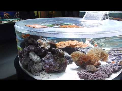 Aquarium of the Pacific: Tropical Pacific Gallery (1/3)