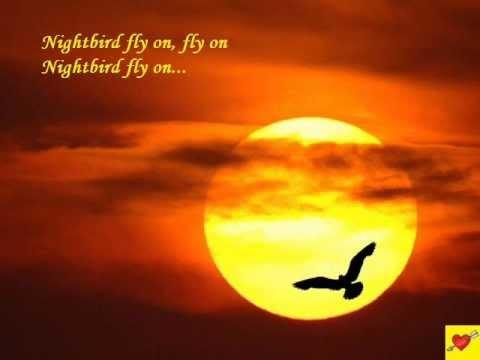 Nightbird  Kalapana