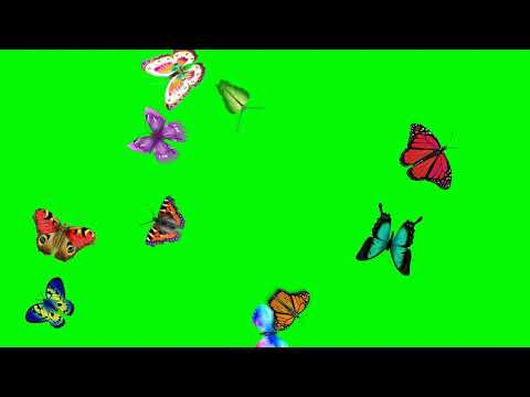 green-screen-animated-flying-butterfly🦋-effect|latest-technology-butterfly-effect-motion-background