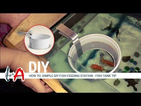 How To: Simple DIY Fish Feeding Station - Fish Tank Tip