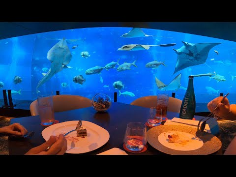 Eating With The Fishes At Ocean Restaurant