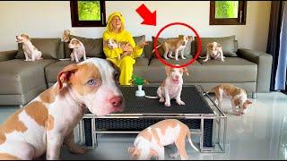 Сute puppy magic tricks by Asya Siam!