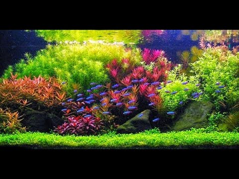 STEP BY STEP AQUASCAPE DUTCHSTYLE