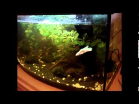 akwarium 54l aquarium tank youtube. Black Bedroom Furniture Sets. Home Design Ideas