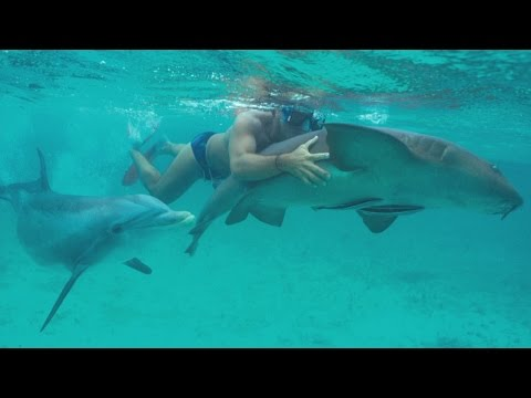 JoJo the Shark Killer