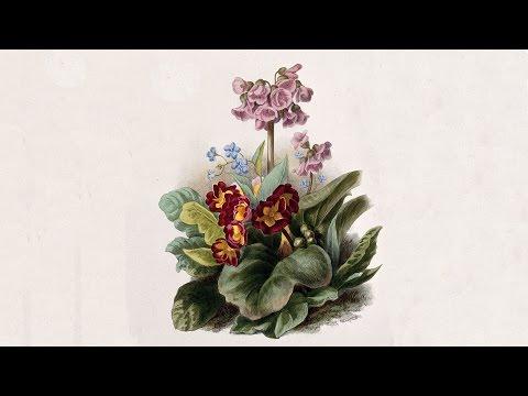 Gardening Entrepreneurs - Professor Sir Roderick Floud FBA