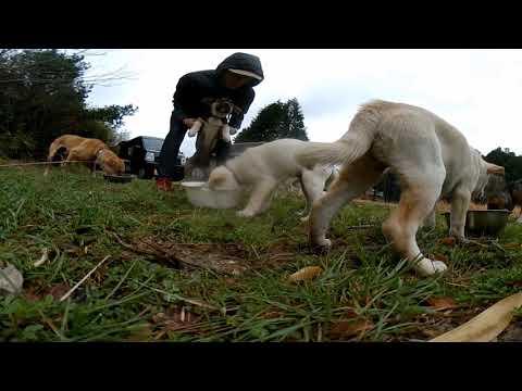 【360度動画】子犬の食事風景