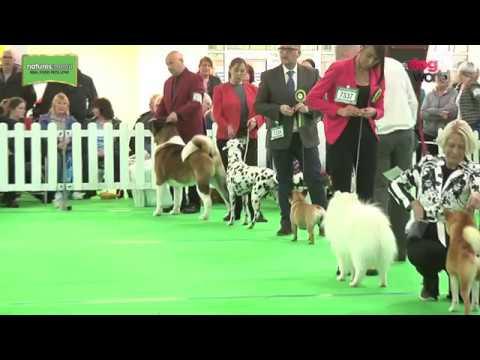WELKS Championship Dog Show 2017 - Utility group - Shortlist