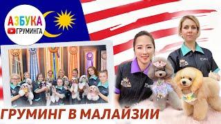 Школа груминга в Малайзии Обучение стрижке конкурс азиатские собаки