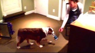Service Dog Training Featuring Ivy Kite - Service Dog Training Charlotte North Carolina