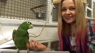 видео Разведение птиц