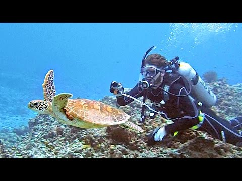 SCUBA DIVING DEEP SEA IN JAPAN