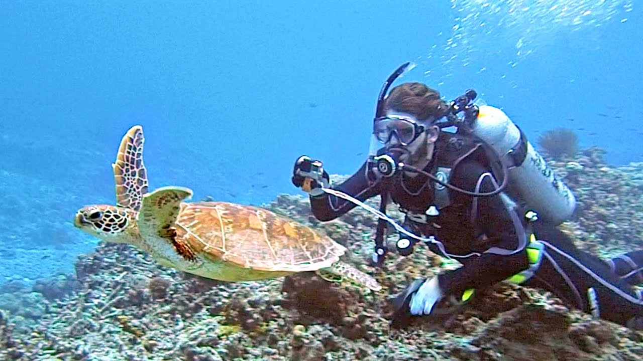 Scuba diving deep sea in japan youtube for The dive shop