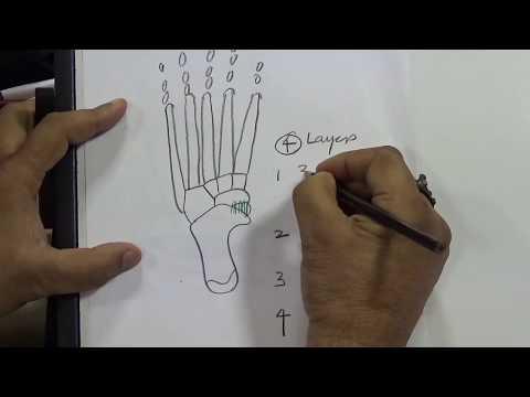 Anatomy of foot...by Prof G.K Singh Sir (H.O.D Orthopaedics, KGMU, lucknow)