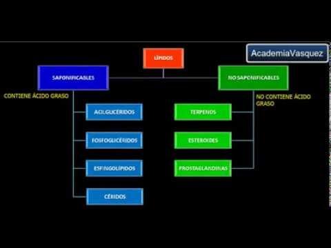 Lípidos Propiedades Funciones Y Clasificación