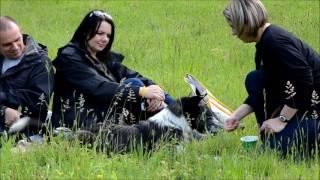 Apprendre à manipuler son chien en respectant ses émotions
