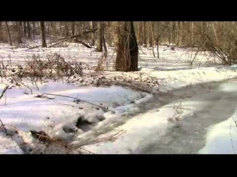 A Bigfoot Trackway?