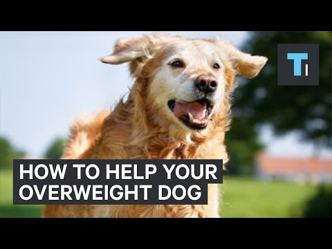 How to get your overweight dog back in shape Mp3