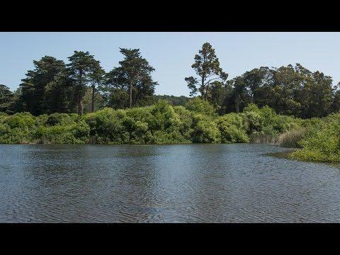 Restoring Moutain Lake in the Presidio of San Francisco