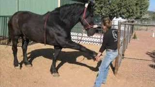 Equine And Canine Massage Therapy